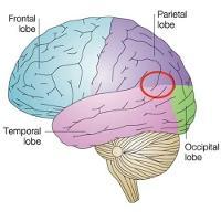 Psychopathie Adaptée / Psychopathe (Successful Psychopaths)  - Page 3 20625-34065-image