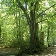 Quels sont les effets des espaces verts urbains sur la for Espace vert quebec