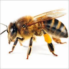 piq res d 39 abeilles et de gu pes comment se prot ger et r agir psychom dia. Black Bedroom Furniture Sets. Home Design Ideas