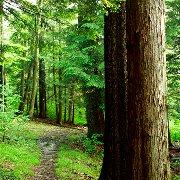 Les facteurs de l'effet anti-stress d'une marche en forêt