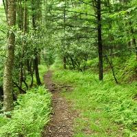 L'écothérapie contre la dépression, le stress et l'anxiété